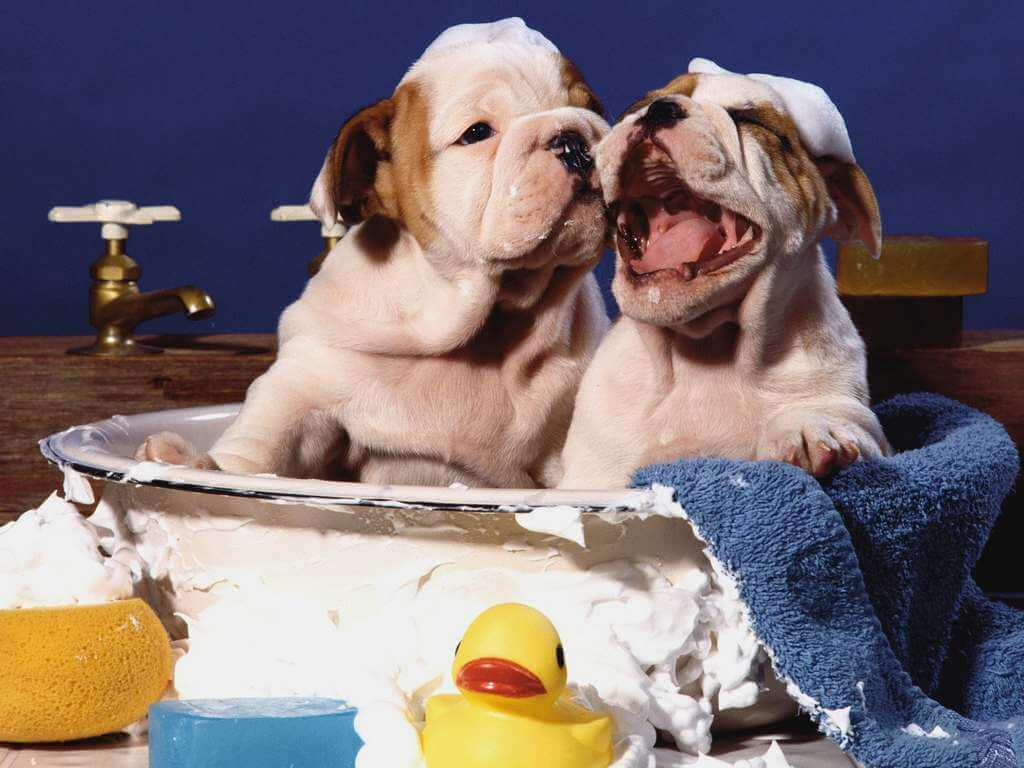 Grooming in Sarasota: The DOs and DON'Ts of Pet Bathing