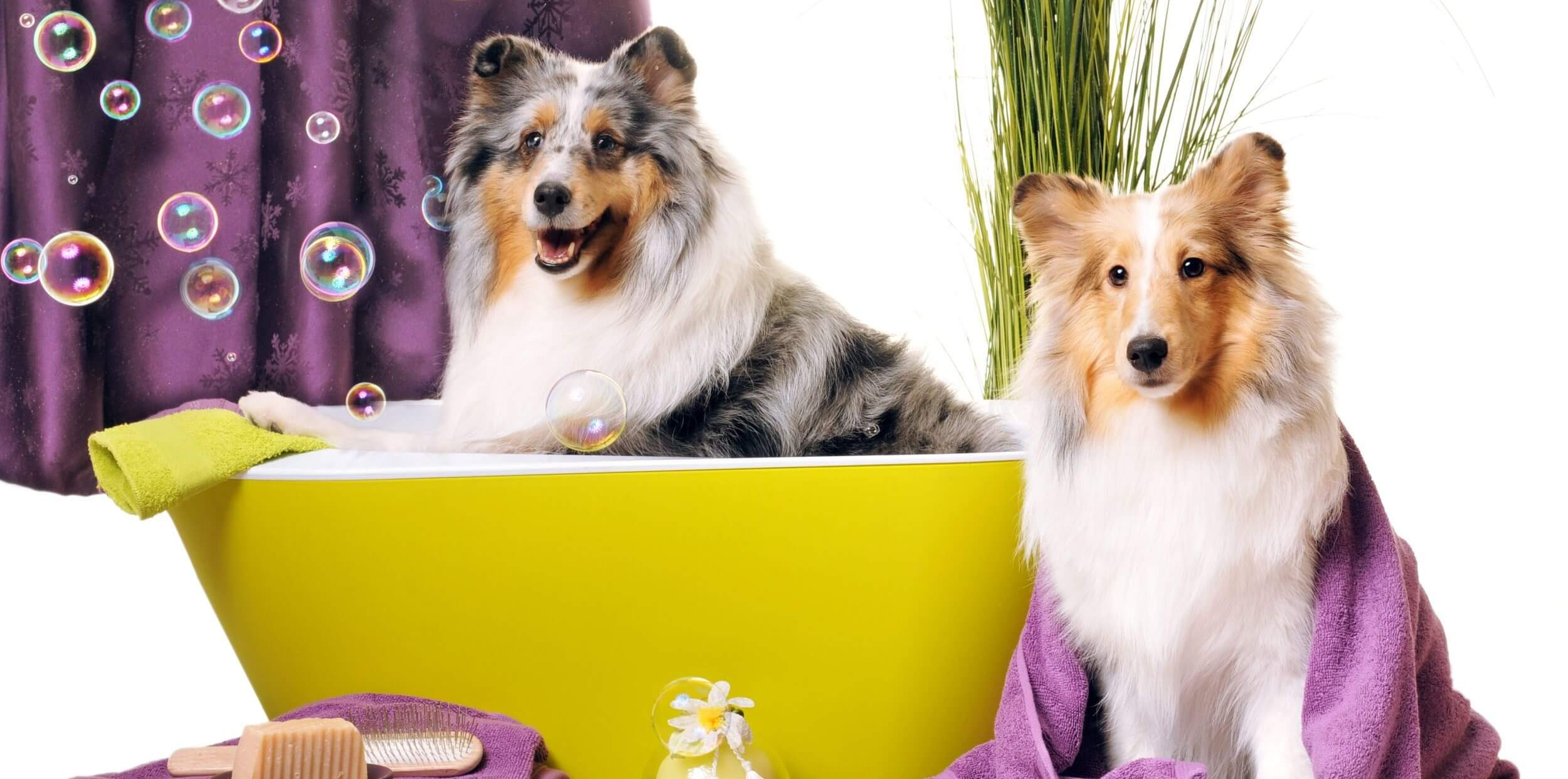 So Fresh and So Clean: Choose the Best for Dog Grooming Sarasota FL!