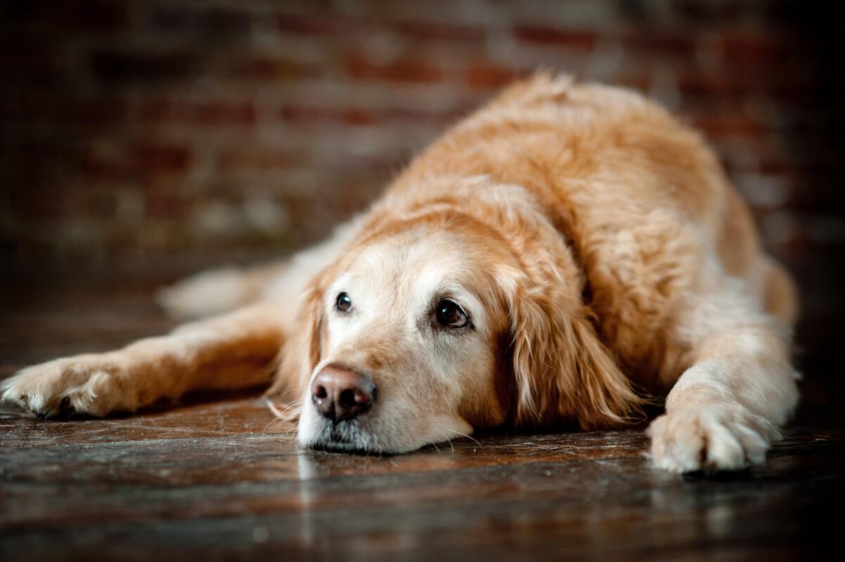 Senior Pet Care – Wellness Profiles and Veterinary Care