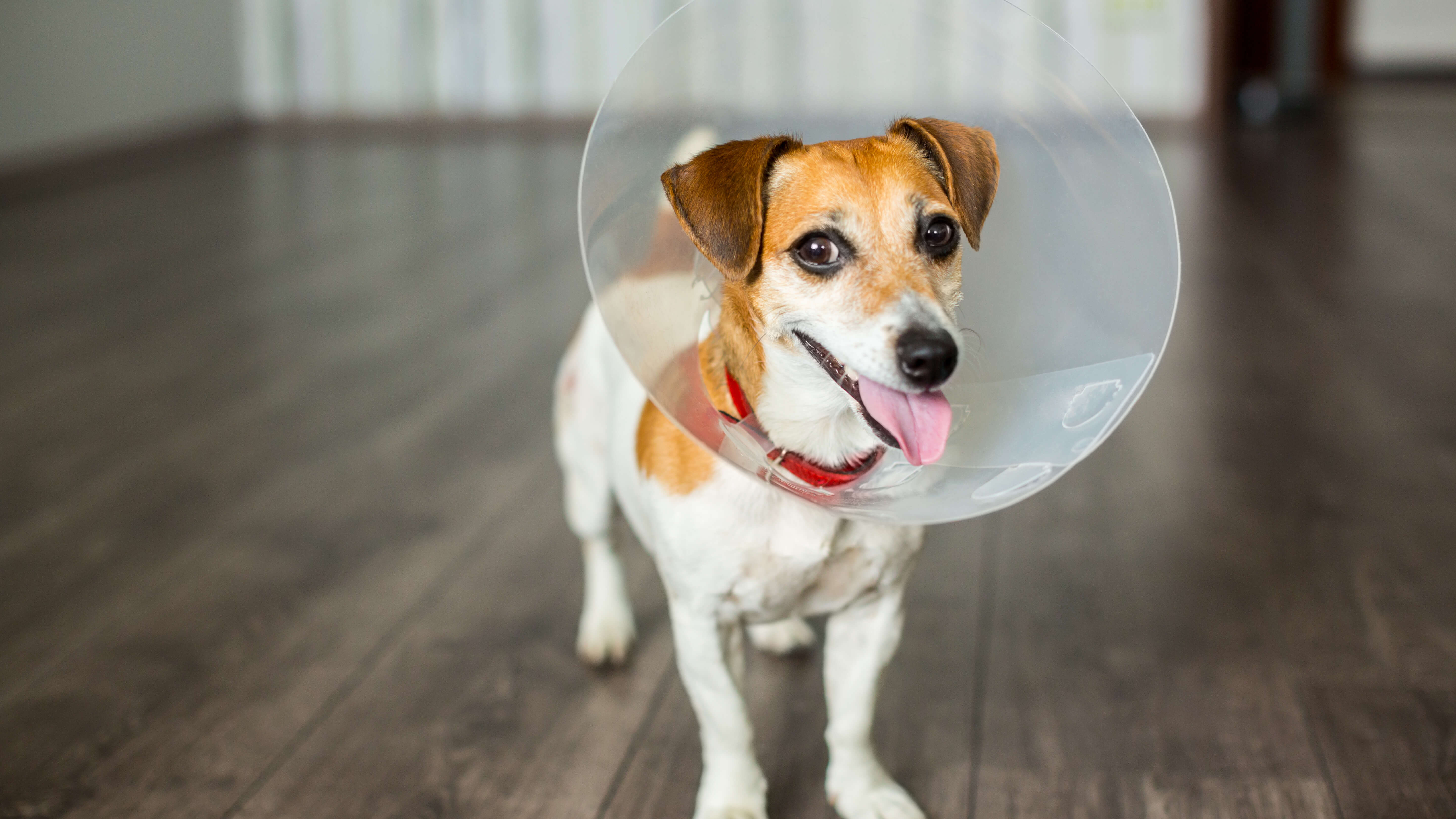 Should I Spay My Dog? 5 Commonly Asked Questions