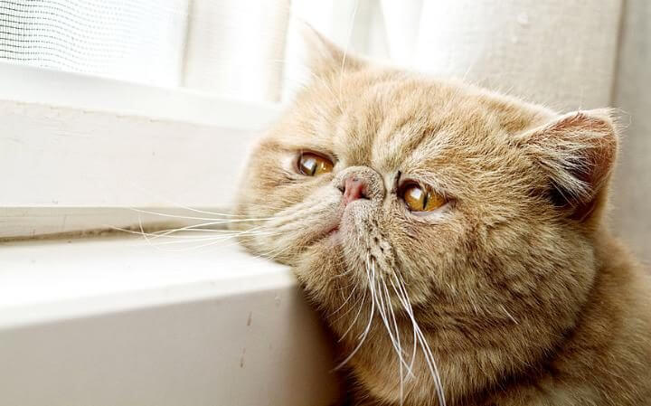 Sudden Death in Cats