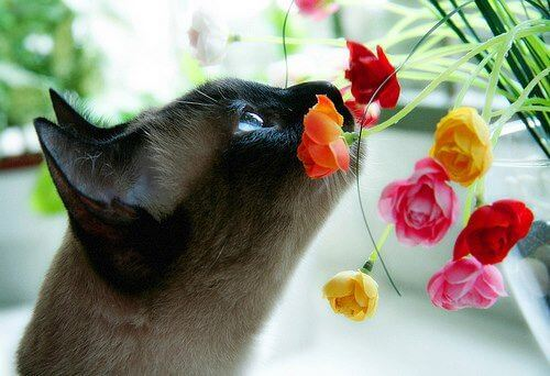 Toxic Plants for Pets